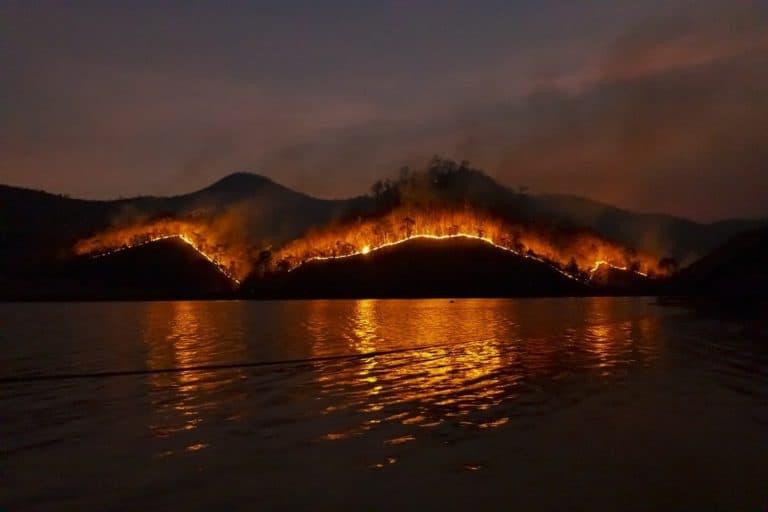 יער נשרף